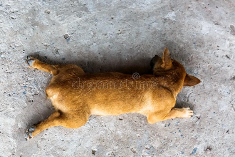 Sleeping dog in the afternoon. Sleeping dog. Peaceful scene stock photo