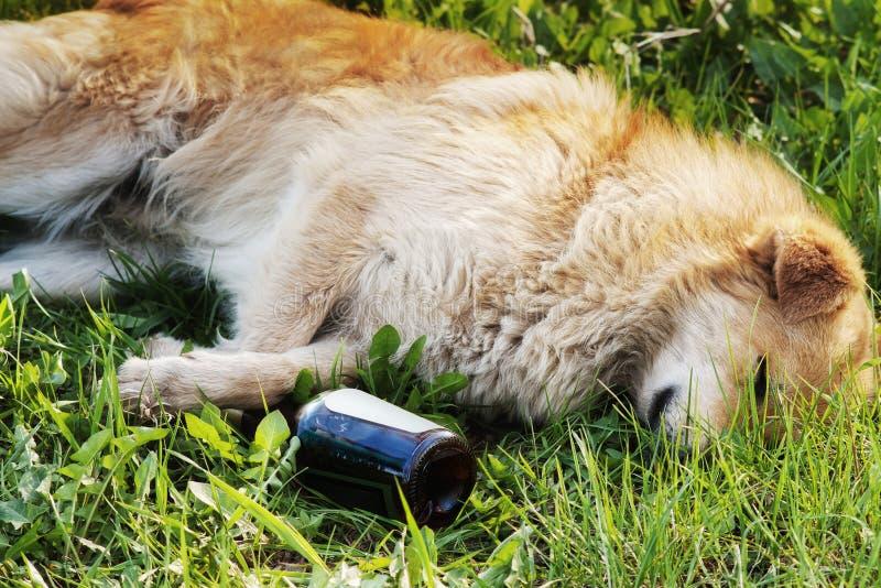 Download Sleeping Dog With Alcohol Bottle Stock Photo - Image: 19309900