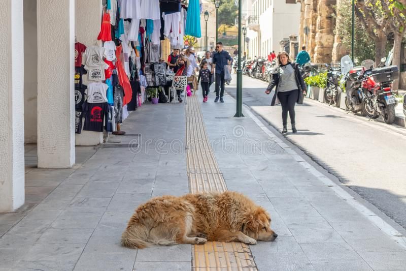 Sleeping dog. Brown abandoned animal sleeps in the middle of sidewalk. April 28, 2019. Athens, Greece. Sleeping dog. Brown abandoned animal sleeps in the middle royalty free stock photography