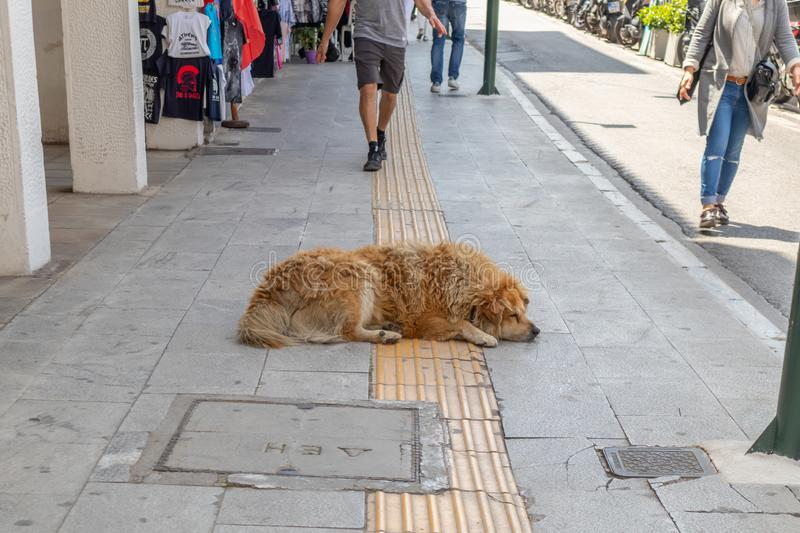 Sleeping dog. Brown abandoned animal sleeps in the middle of sidewalk. April 28, 2019. Athens, Greece. Sleeping dog. Brown abandoned animal sleeps in the middle royalty free stock image
