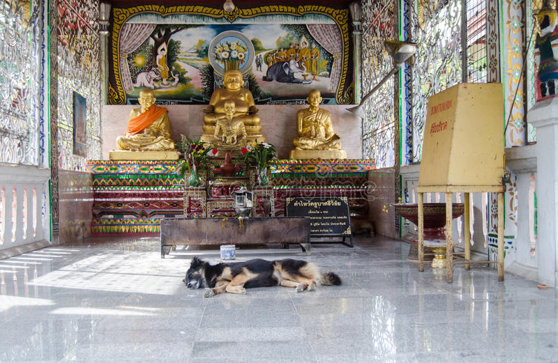 Sleeping dog at Buddhist Temple, Thailand royalty free stock photography