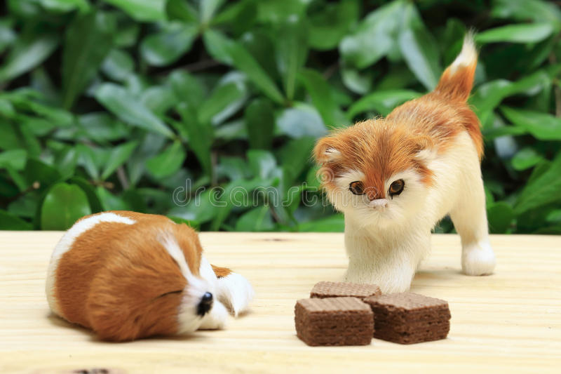 Sleeping dog and a cat look the wafer with chocolate cream. royalty free stock images
