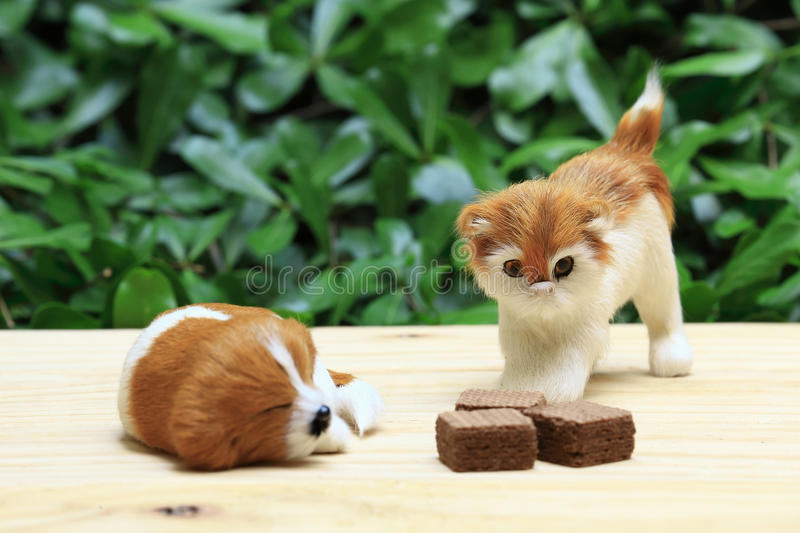 Sleeping dog and a cat look the wafer with chocolate cream. stock photos