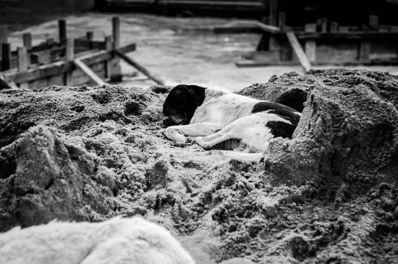 Sleeping Dog On Construction Site In Turkish Summer Vacation Town. Streets and environment of Cinarcik town during a soft summer day - the district of Yalova stock images