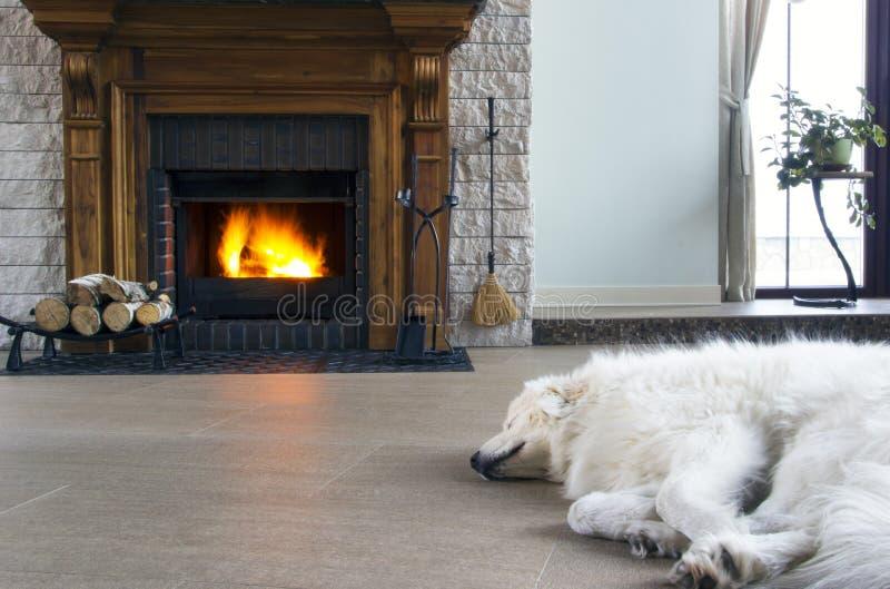 Sleeping dog and fireplace. Sleeping dog basking near the fireplace royalty free stock photos