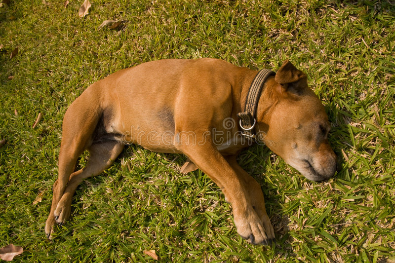 Download Sleeping Dog On Grass Stock Image - Image: 6436111