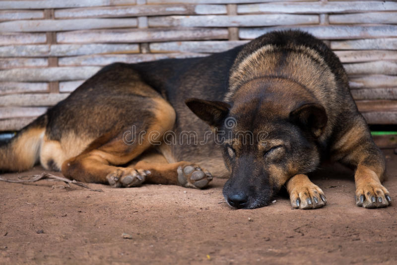 The sleeping dog lied on sand. It seems having a dream royalty free stock image