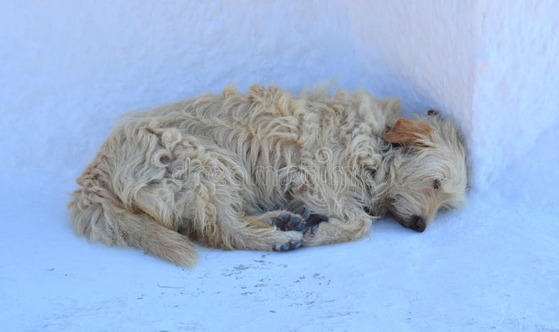 Sleeping Dog royalty free stock photo