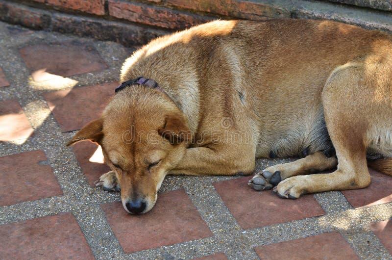 Sleeping dog. On the ground stock photo
