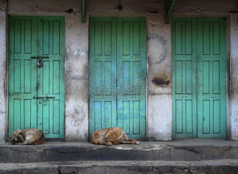 Sleeping dogs royalty free stock image