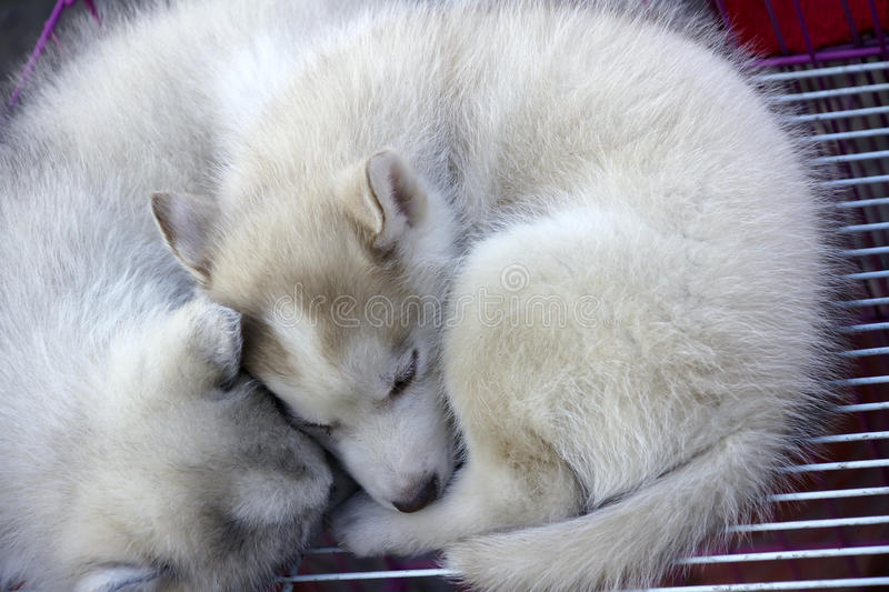 Sleeping dogs. Two cute puppy are sleeping royalty free stock photos
