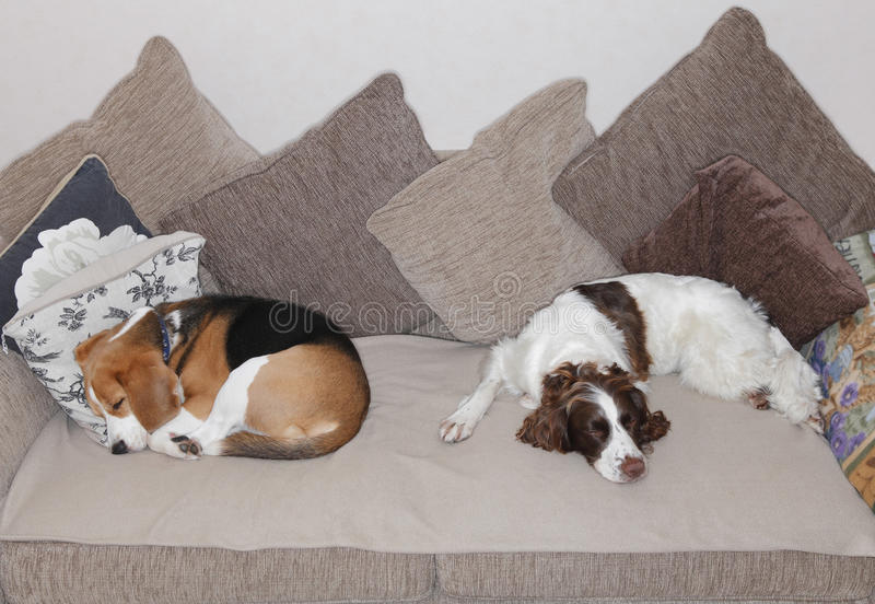 Download Sleeping dogs stock photo. Image of cushions, dogs, sleeping - 34924106