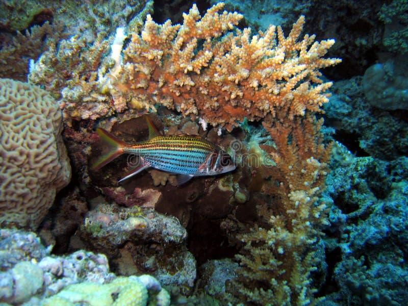 Sleeping fish royalty free stock images