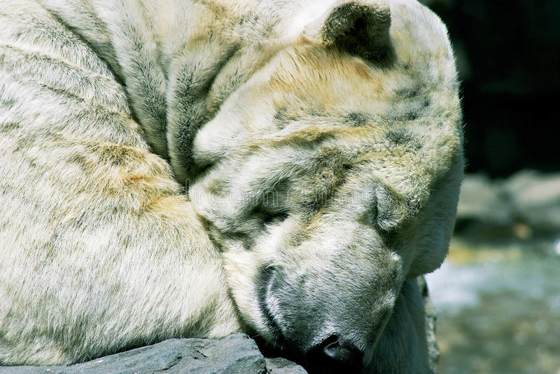 Sleeping Giant royalty free stock photo