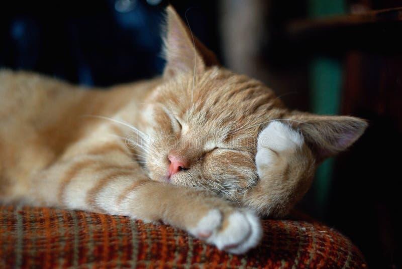 Sleeping ginger cat stock photos