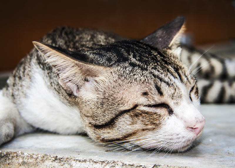 Sleeping grey and brown tubby slep on the cement. Closet up the cat face in his sleep time stock photography