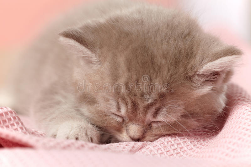 Download Sleeping kitten stock image. Image of young, feline, face - 22488373