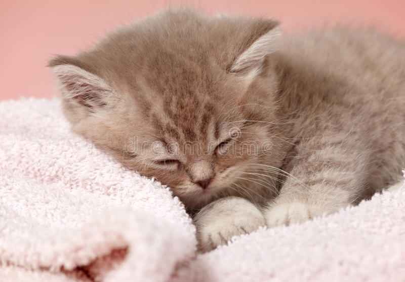 Download Sleeping kitten stock image. Image of kitten, face, small - 22504675