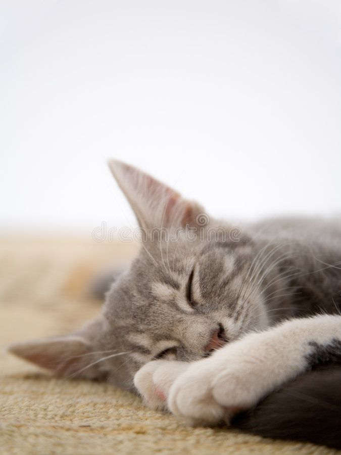 Sleeping kitten stock image