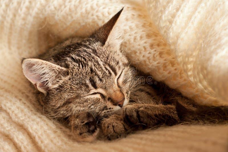 Sleeping kitten. Beautiful tabby kitten sleeping on a wool scarf stock images