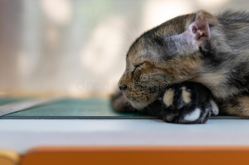 A sleeping kitten on the table. Photo of A sleeping kitten on the table royalty free stock photos