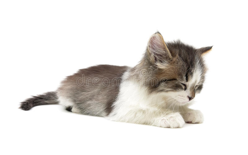 Sleeping kitten on a white background. horizontal photo. Sleeping little fluffy kitten on a white background close-up. horizontal photo royalty free stock image