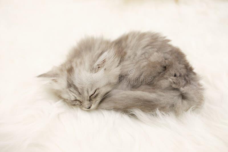 Sleeping kitten on white fur carpet stock photos