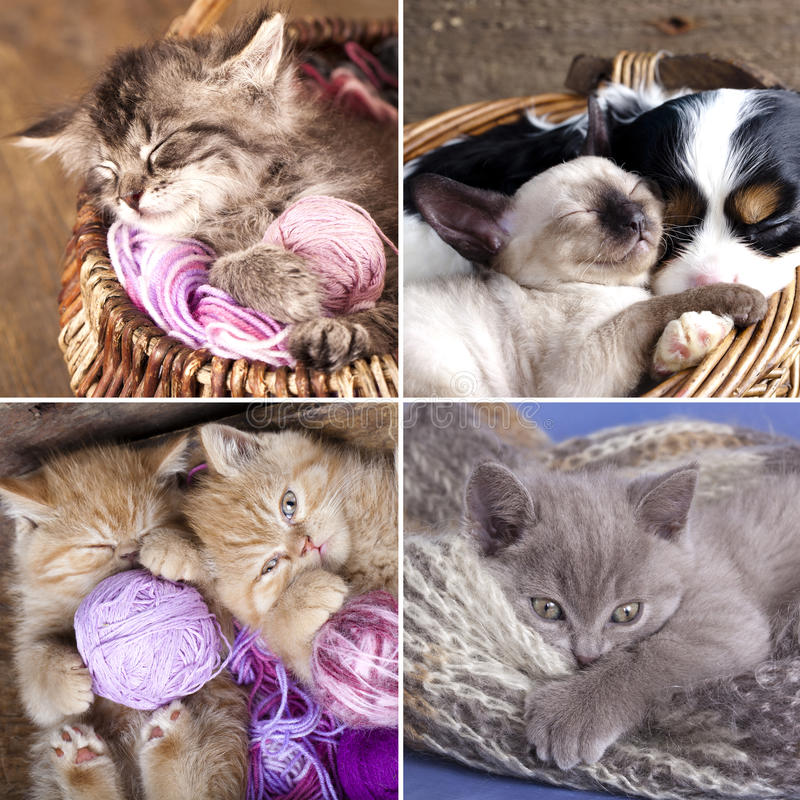 Sleeping kittens in basket stock photos