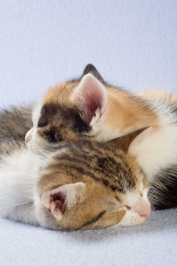Sleeping kittens, isolated royalty free stock photo
