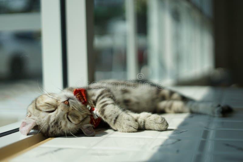 Sleeping Meaow royalty free stock photos