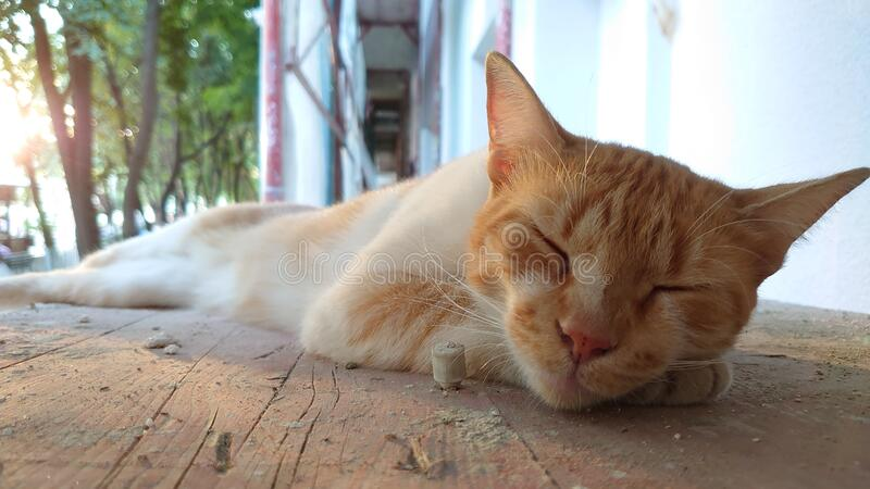 Sleeping orange striped tomcat on a wooden board royalty free stock photography