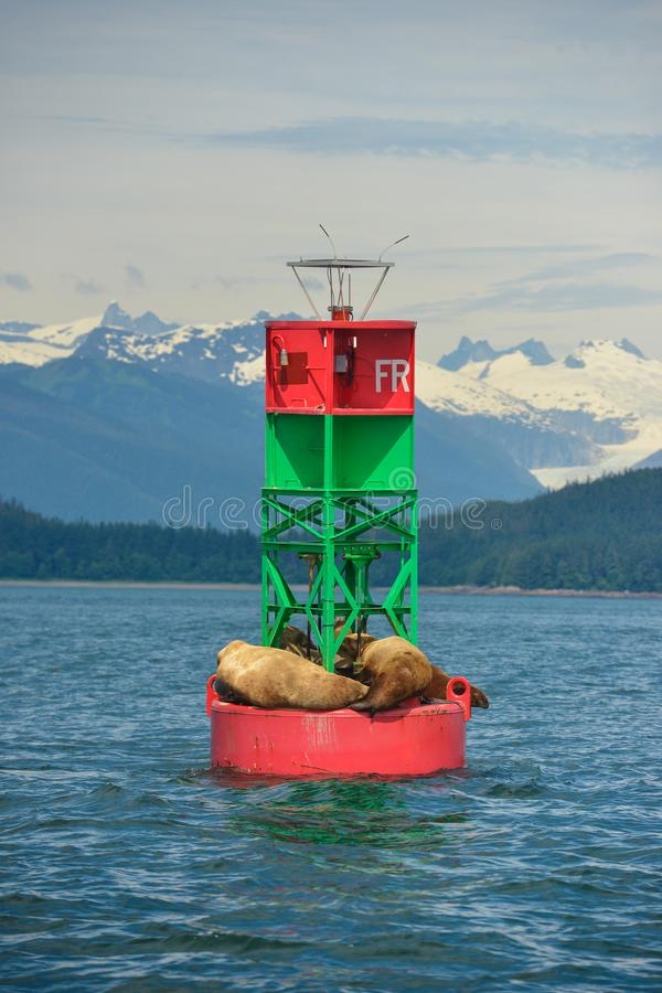 Sleeping seals on a buoy in Alaska. royalty free stock photos