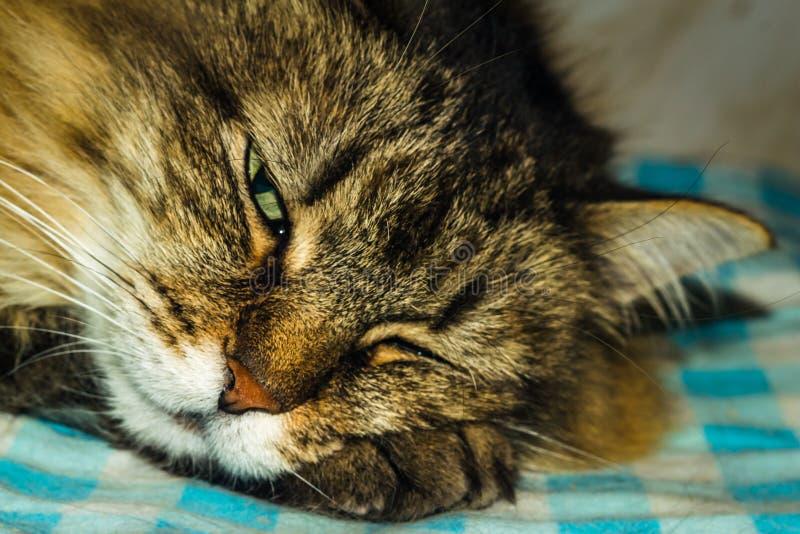 The cat is sleeping stock image