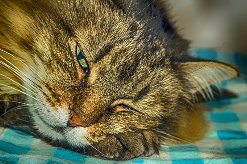 The cat is sleeping stock images