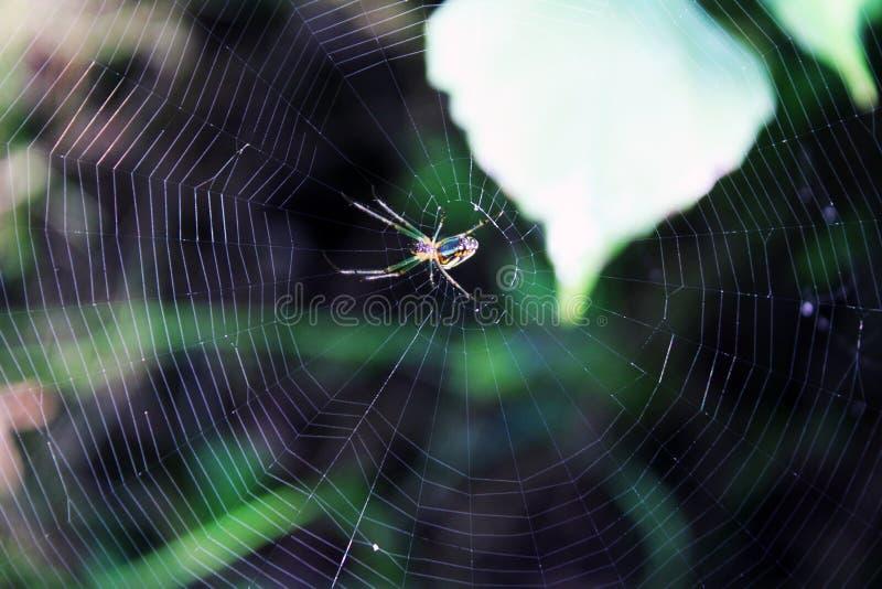 Sleeping spider royalty free stock photo