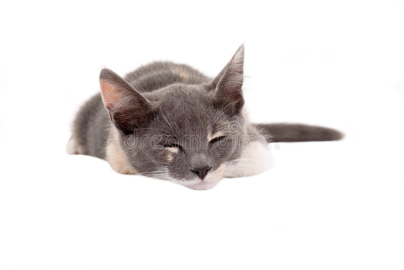 Sleeping spotty kitten stock photos