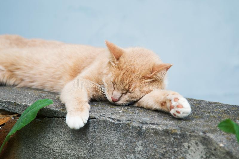 Sleeping on the street red cat summer day. Close-up stock image