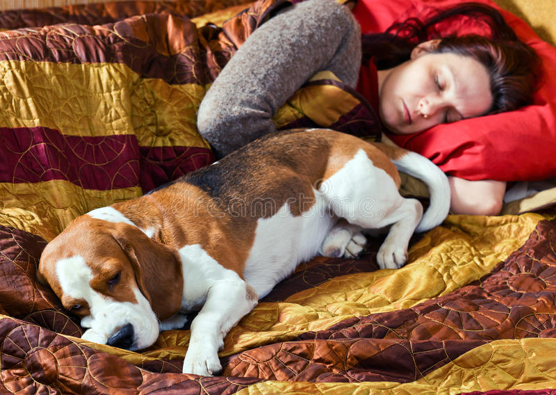 The sleeping woman and its dog. Focus on a dog stock photography