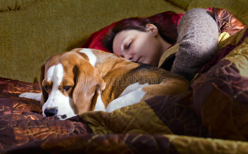 Sleeping woman and its dog. The sleeping woman and its dog in bedroom royalty free stock photography