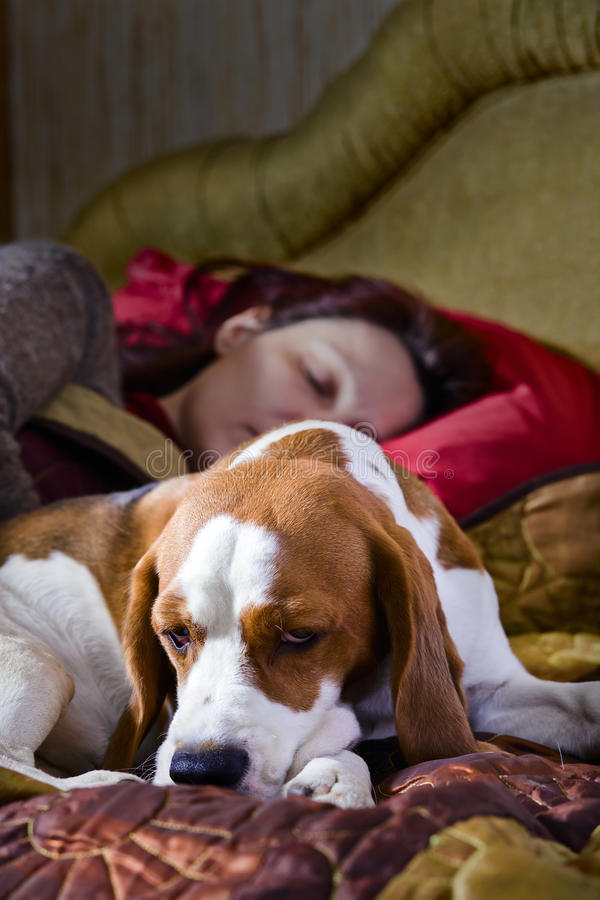 Sleeping woman and its dog. The sleeping woman and its dog in bedroom royalty free stock photos