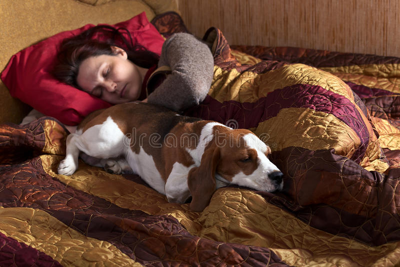 Sleeping woman and its dog. The sleeping woman and its dog in bedroom royalty free stock photo