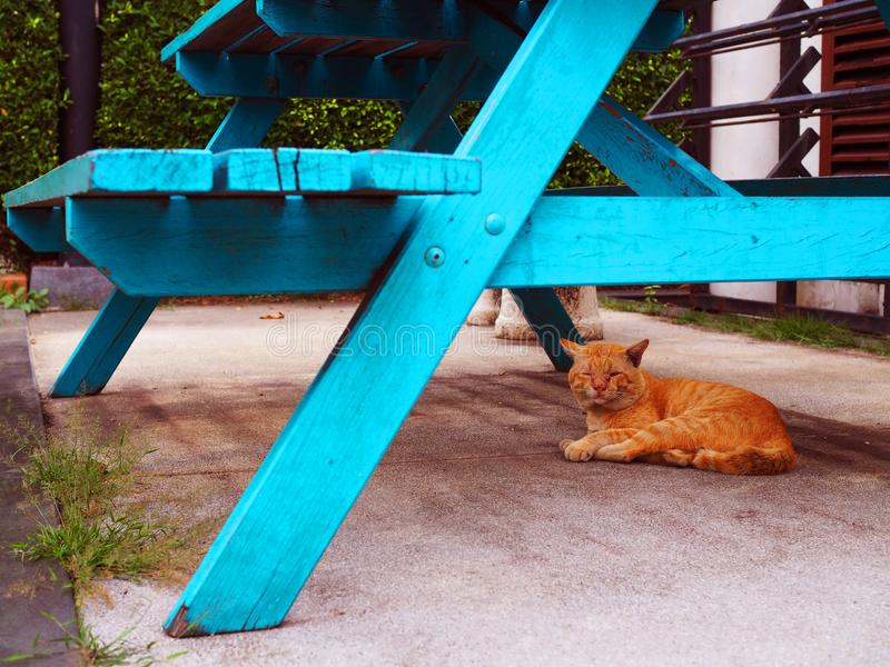 Sleeping yellow tiger pattern stray cat under blue wooden bench stock photography