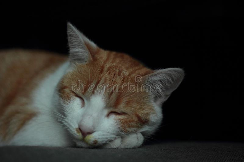 Sleeping cat with pollen on its nose. A sleeping young orange cat with yellow pollon around its nose stock photography