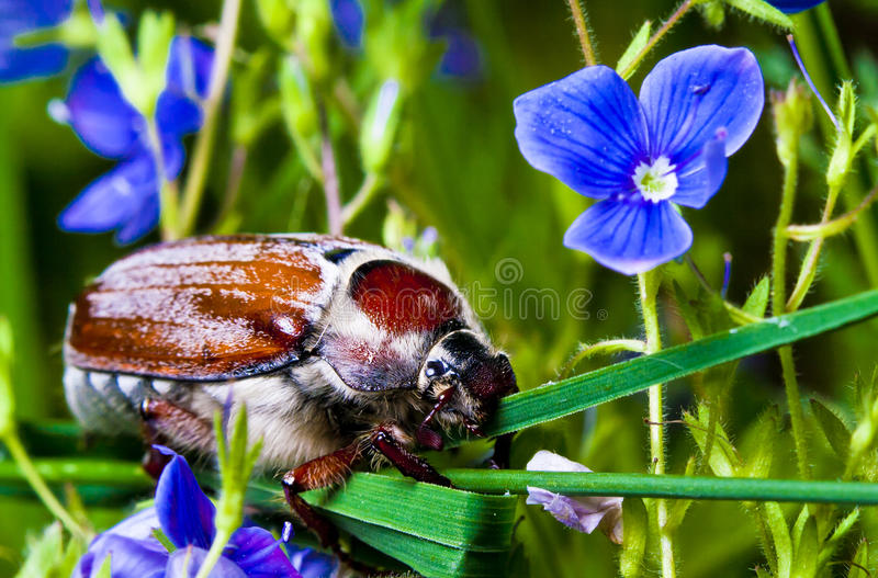 Download Sleepy stock image. Image of green, insect, relaxation - 25433741
