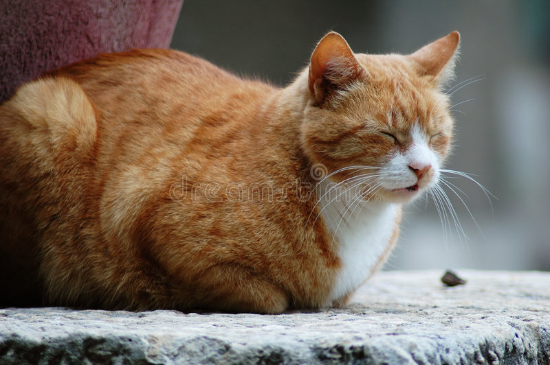 Download Sleepy brown cat stock image. Image of tail, curled, sleep - 123861