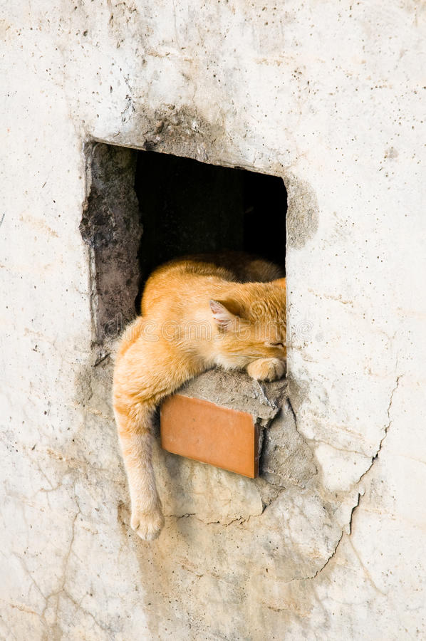 Free Sleepy Cat Royalty Free Stock Photo - 18438255