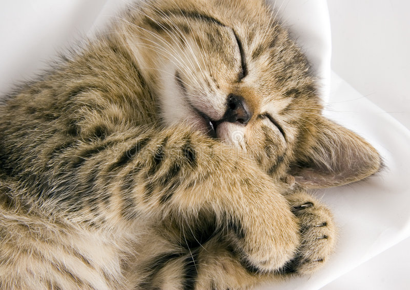Sleepy cat. Cat - the small furry animal with four legs and a tail; people often keep cats as pets stock photos