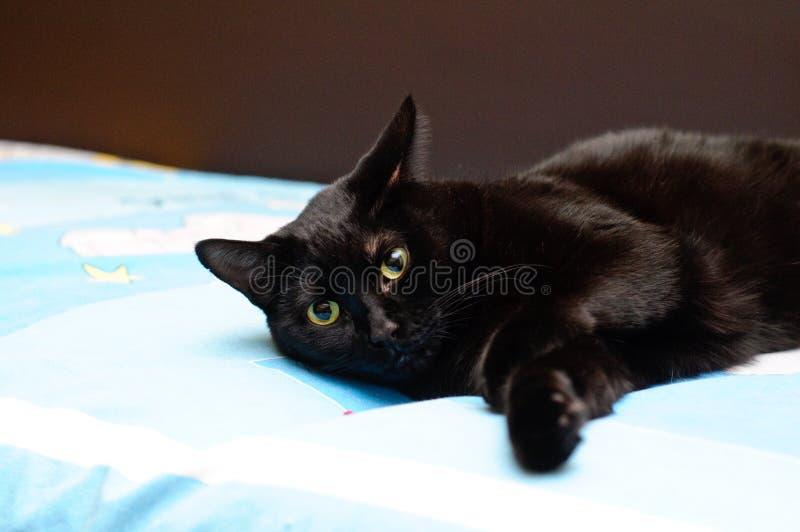 Download Sleepy cat stock photo. Image of surprised, cloth, sleepy - 22812568