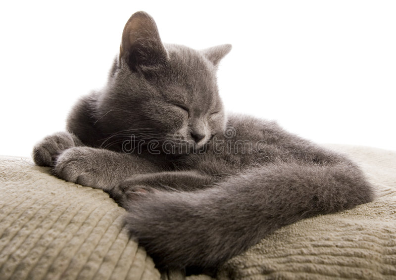 Sleepy cat. Cat - the small furry animal with four legs and a tail; people often keep cats as pets royalty free stock photography
