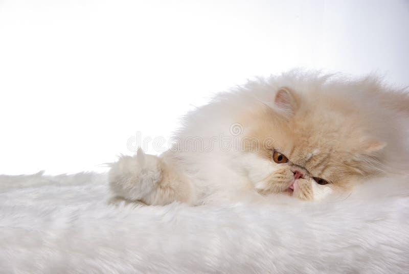 Download Sleepy Cat Royalty Free Stock Photo - Image: 7999045